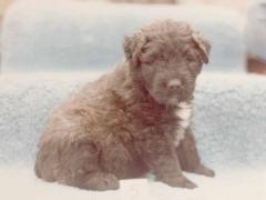 puppyx